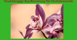orchideenerde-test