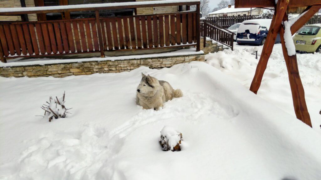 hund im schnee bild