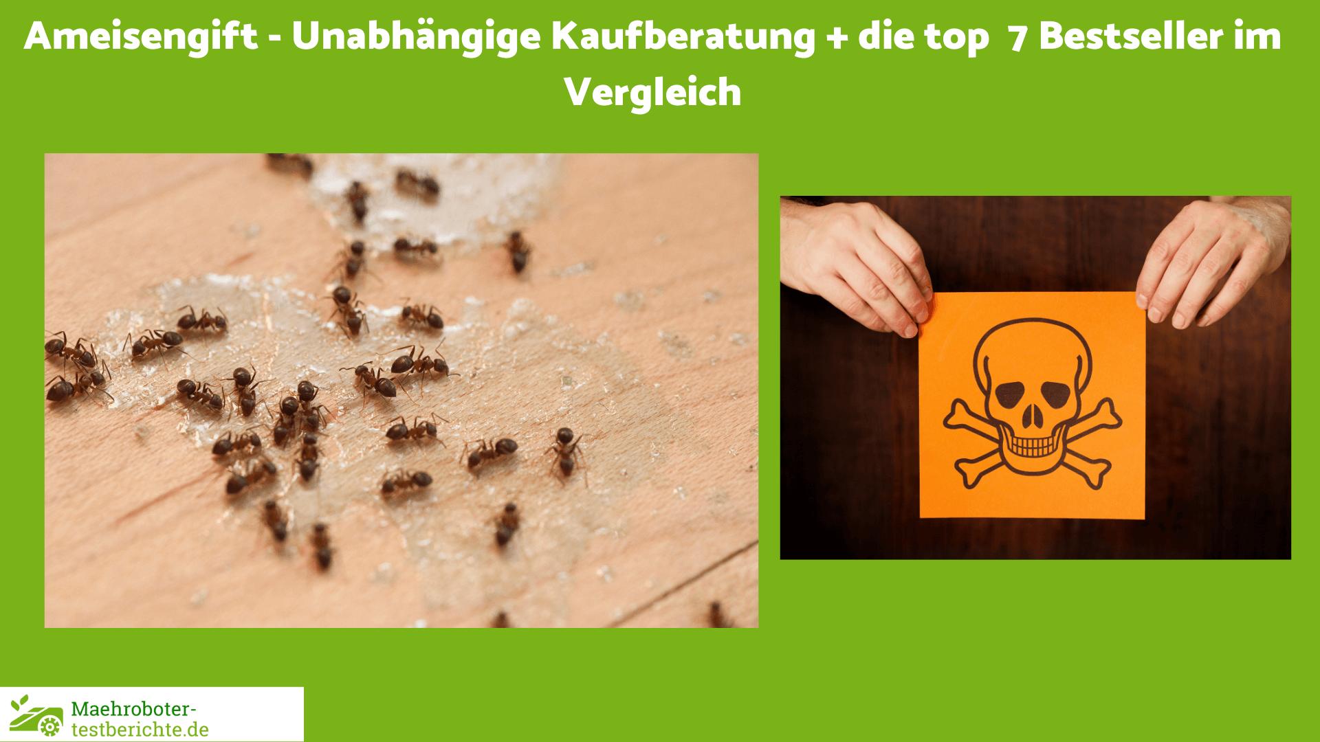 Ameisengift Test